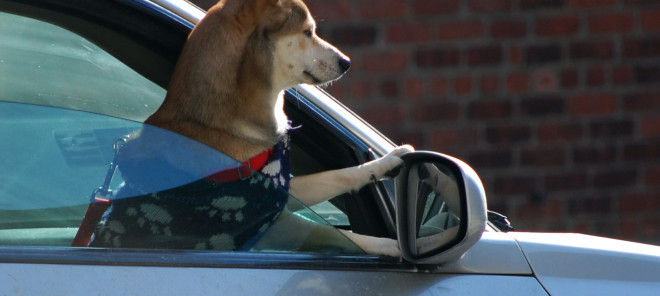 10 Tips for Safe Car Travel With Your Pet