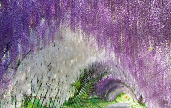 Take A Trip To Floral Heaven Of Hitachi Seaside Park- Japan